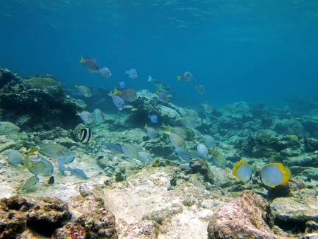 School of fish in caribbean sea photo