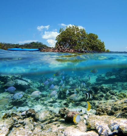 corales marinos: Superficie y la vista bajo el agua con isla de manglares, kayak y peces tropicales
