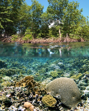 Surface and underwater view with mangrove and coral ecosystem photo