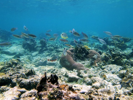 School of colorful fish in the caribbean sea photo