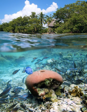 Surface and underwater view  in Bocas del Toro, Panama photo