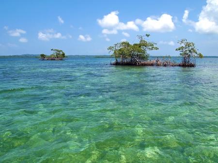 Small mangrove islands in Bocas del Toro Stock Photo