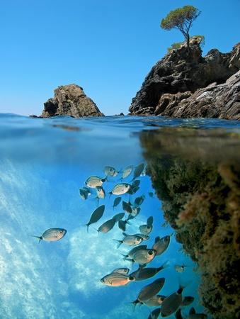 Oppervlakte en onderwater zicht met kleine eiland en school van gezadelde Zeebrasem Stockfoto
