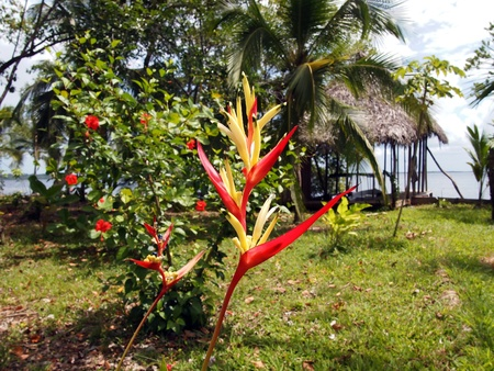 heliconia: Parakeet Flower in tropical garden with sea in background Stock Photo
