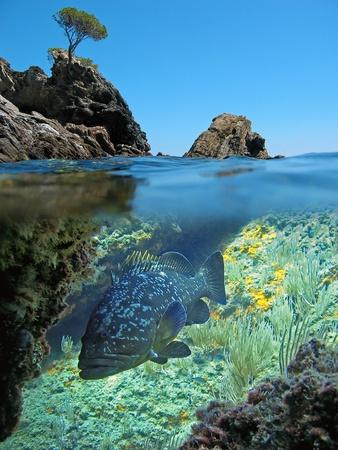 cernia: Piccola isola e comune cernia obscurus  Archivio Fotografico