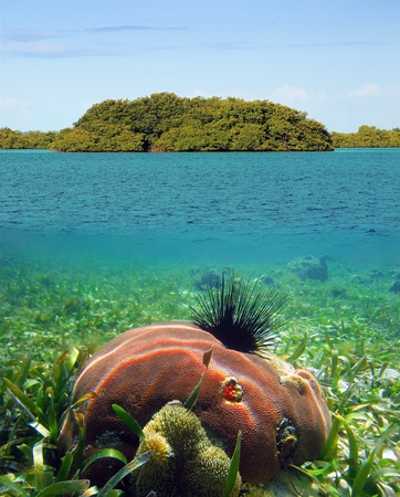 Surface and underwater view of mangrove island and coral photo