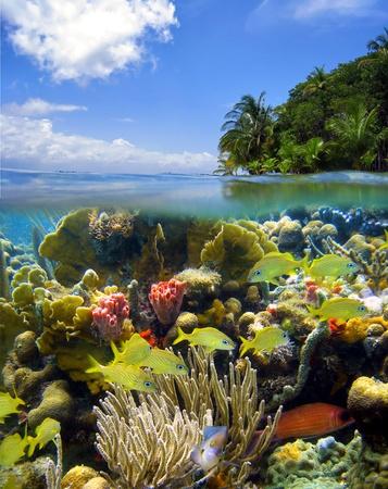 Underwater scene photo