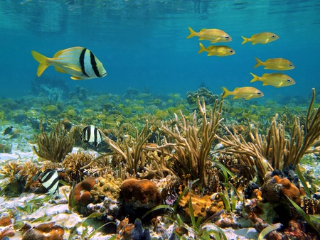 Coral reef with colorful tropical fish and water surface, Caribbean sea photo