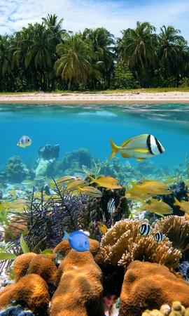 corales marinos: Vista submarina y de superficie con bellos �rboles de playa y cocos, arrecifes de coral y peces tropicales, mar Caribe Foto de archivo