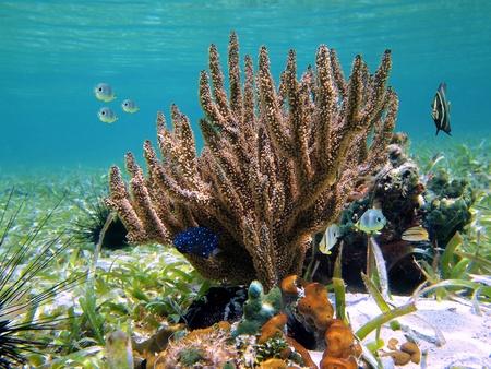mayan riviera: Coral with colorful tropical fish, Caribbean, Mayan Riviera, Mexico Stock Photo