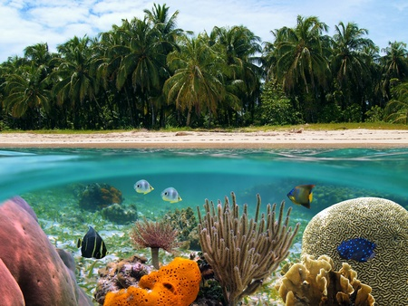 coral sea: Underwater and surface view with beach and coconuts trees, coral reef and tropical fish, Caribbean