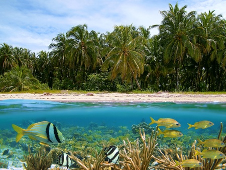 Underwater and surface view with beautiful beach and coconuts trees, coral, school of tropical fish, Caribbean photo