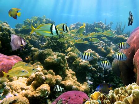 seychelles: 열대 물고기의 학교와 화려한 산호초
