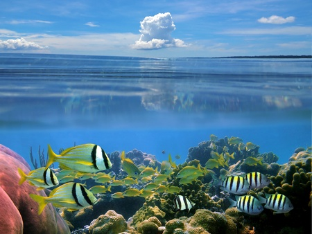 Surface and underwater view with school of tropical fish, hard coral and blue sky with cloud, Caribbean