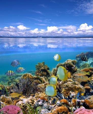 seychelles: 화려한 산호초와 열대어의 학교와 수중 및 표면보기