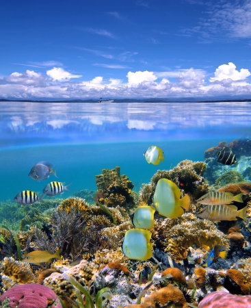 Underwater and surface view with colorful coral reef and school of tropical fish
