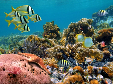 seychelles: Colorful coral reef with school of tropical fish