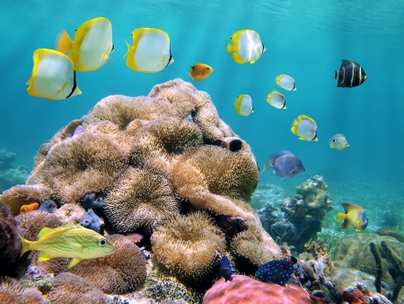 School of colorful tropical fish with coral and sea anemones