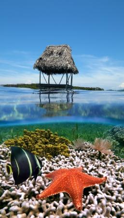 zancos: Vista submarina y de superficie, con una caba�a sobre pilotes, un �ngel, una estrella de mar gusanos, esponjas tubo amarillo y el mar en el coral, el Caribe, Bocas del Toro, Panam� Foto de archivo