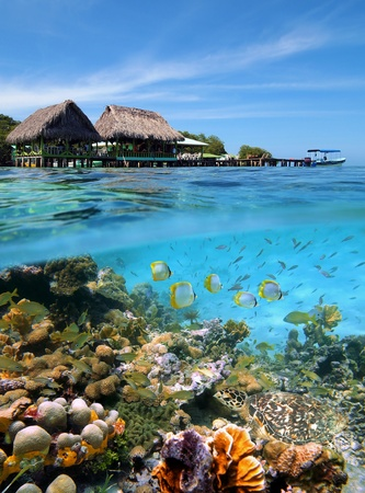 stilt house: Underwater and surface view with a Caribbean restaurant, a coral reef with a green turtle and tropical fish, Crawl Cay, Caribbean, Bocas del Toro, Panama Stock Photo