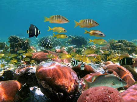 Caribbean lagoon with coral garden and colorful tropical fish, Bocas del Toro, Panama photo