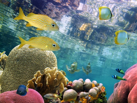 Below the mirror surface of a clear lagoon lies a thriving coral garden with colorful tropical fish Stock Photo