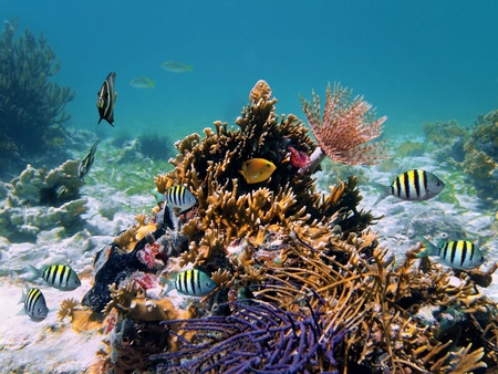 cayman islands: Tropical fish and tube worm in a Caribbean coral reef