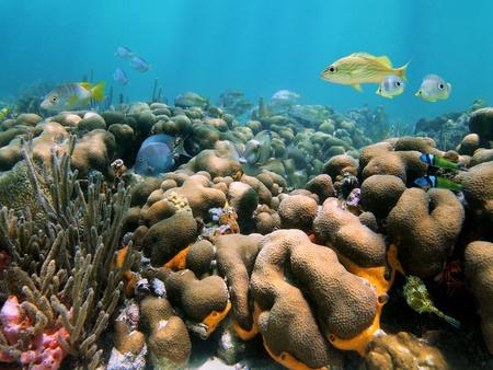 cozumel: Hermosos arrecifes de coral con peces tropicales en el mar Caribe