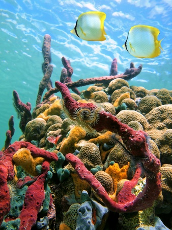 dominica: Colorful sea sponges and tropical fish in a coral reef  with water surface in background, Caribbean sea Stock Photo