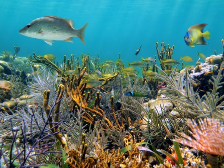 antigua: Clear water of an caribbean lagoon with a coral garden and tropical fish