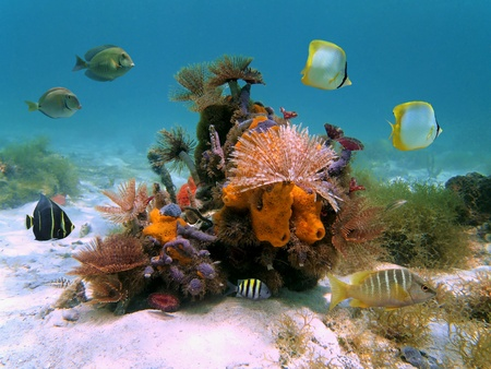 Colorful bouquet of tube worms and sea sponges with tropical fish in the Caribbean sea Stock Photo