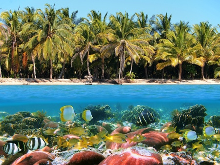 Underwater and surface view of a beach with coconuts trees and a coral reef with tropical fish, Caribbean photo