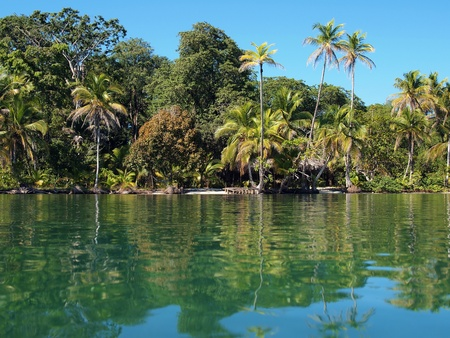 Coast in Bastimentos island with small beaches and coconuts trees, Bocas del Toro, caribbean, Panama photo