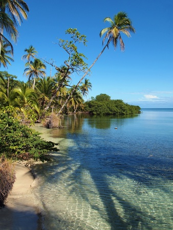 Beach in Bastimentos island with shade of a coconuts tree in the water,, Bocas del Toro, caribbean, Panama Stock Photo - 11782850