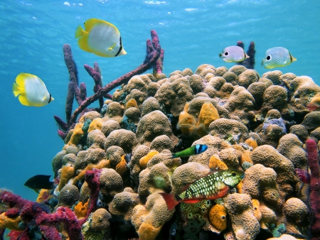Colorful tropical fish in a coral reef with water surface in background, Caribbean sea