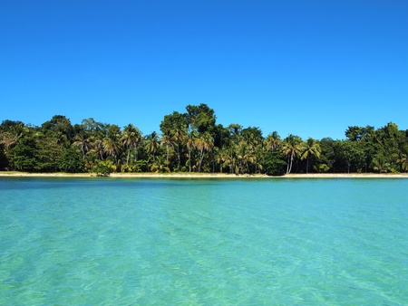 Virgin beach with coconuts trees and crystalline water, Caribbean, Mexico photo