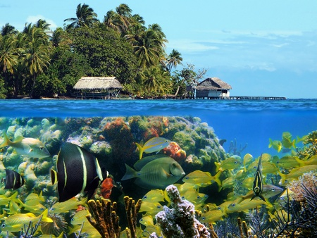 exotic fish: Underwater and surface view of an island with huts and coconuts trees and a coral reef with tropical fish, Caribbean