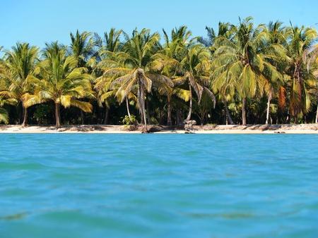Virgin beach with coconuts trees, Caribbean, Mexico photo