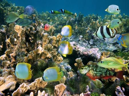 cayman islands: Shoal of colorful tropical fish in a coral reef, Caribbean sea