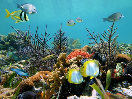 Colorful seabed in the Caribbean sea, Costa Rica photo