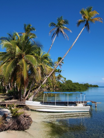 Tropical beach with a boat at dock and coconuts trees, Bocas del Toro, caribbean, Panama Stock Photo - 12050020