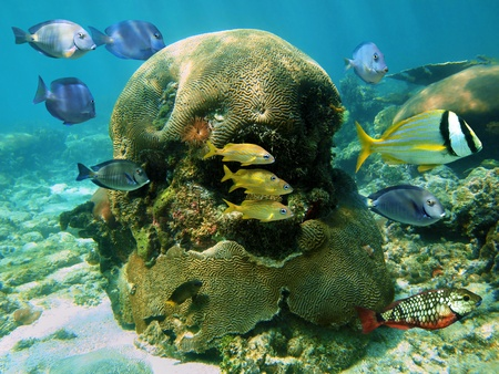 Underwater scene in a coral reef with tropical fish photo