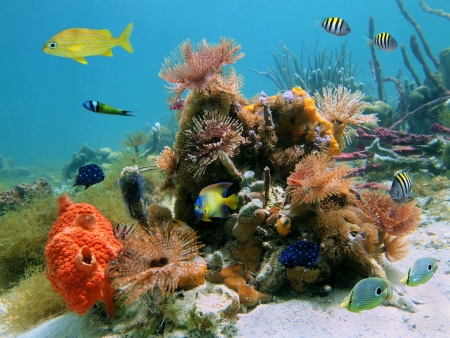 Underwater scene with colorful tropical sealife in a coral reef photo