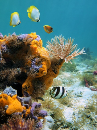 Underwater scene in the Caribbean sea with a tube worm, colorful sponges and fish photo