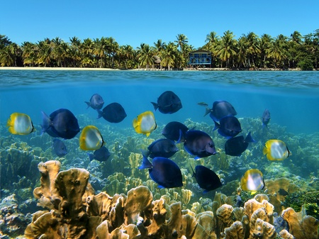 Snorkeling in Panama with a school of tropical fish in a coral reef and a beach with coconuts trees and an hotel in background photo