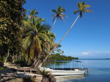Beach in Panama with palms hanging over the sea and a boat at dock, Bocas del Toro, caribbean photo