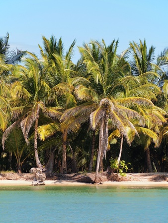 Tropical Beach with coconut palm trees Stock Photo - 12296452