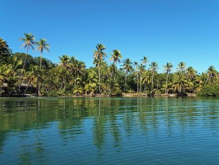 Tropical shore in Panama with coconut palm trees Stock Photo - 12296438