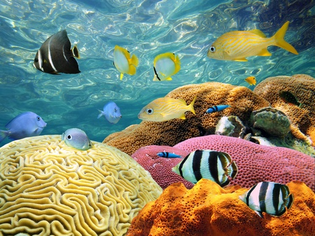 seabed: Underwater Coral scene on a reef with colorful fishes and water surface in background Stock Photo
