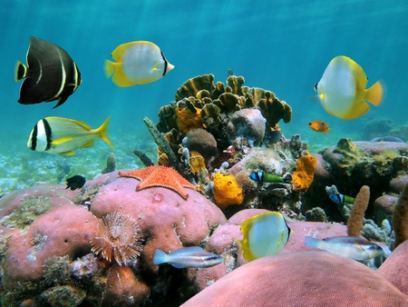 Colorful coral reef with tropical fish photo